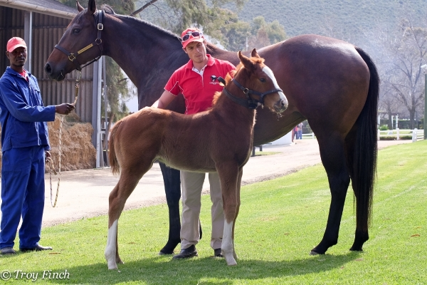 Wylie Hal filly from Savannah Air. (Troy Finch).