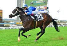Hawwaam (Gavin Lerena) wins the Gr1 SA Classic.