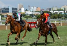 Magnificent Seven (left) and Doublemint in a gallop at Greyville.