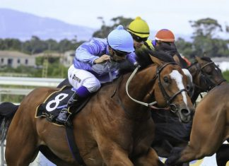 King Of Gems wins Concorde Cup.