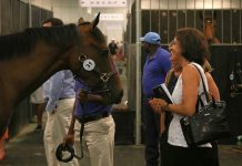 Scene from Cape Premier Yearling Sale.