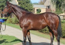 Lot 118, Captain Al filly, R2,6-million.