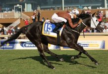 Celtic Sea, fluent SA Fillies Sprint winner under Lyle Hewitson.