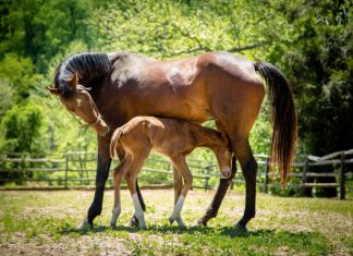 Mare with foal.