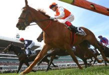 Vow and Declare wins Melbourne Cup.