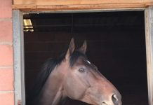 Hawwaam, in his Milnerton stable.