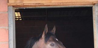 Hawwaam, in his Milnerton stable.