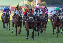 Belgarion is set to carry 53kg in the Vodacom Durban July. (Candiese Lenferna).