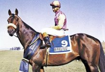 In Full Flight, Durban July 1972.