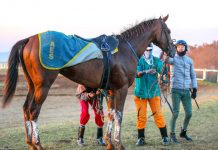 Golden Ducat with jockey Donovan Dillon after a Summerveld workout. (Candiese Lenferna).