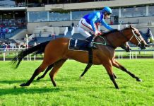 Singforafa, noney horse in Race 1 at Greyville.