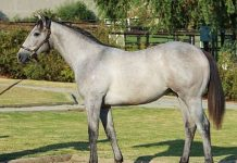 I Am Secret as a yearling.