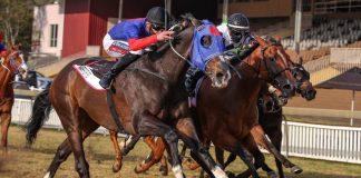 Warrior's Rest (nearest camera) wins the Gr1 Golden Horse Sprint. (Candiese Lenferna).