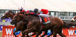 Golden Ducat (nearest camera, flew up to win the Champions Cup. (Candiese Lenferna).