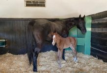 Cherry On Top with her filly by Danon Platina (JPN).