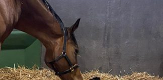 Smart Call with her colt by Kingman.