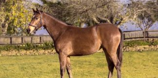 Wylie Hall filly out of Quetta (Romi Bettison).